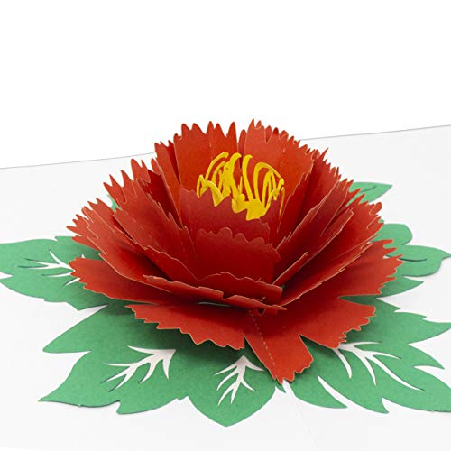 (Paper Love Peony Flower Pop Up Card, 3D Popup Greeting Cards, For Mothers Day, Fathers Day, Graduation, Spring, Valentines Day, Wedding, Anniversary, Birthday, Thank You, Any Occasion)