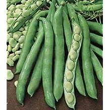 Bean Fava (Broad Bean) 100 seeds