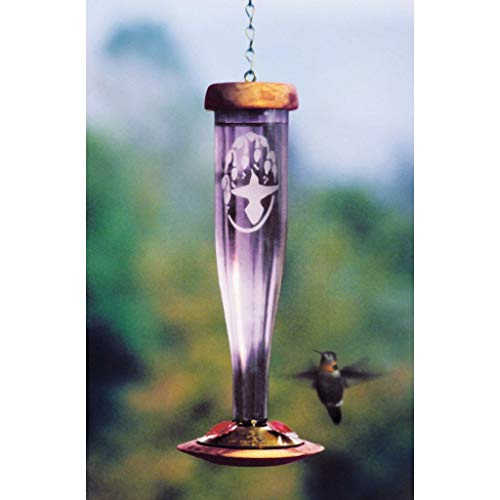 Schrodt Amethyst Etched Lantern Hummingbird Bird Feeder ()