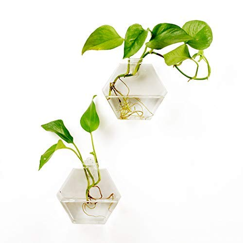 Fashionstorm 2 Packs Home Decor Wall Accessories Geometric Hexagonal Glass Vase Wall Sticked Planters Flower Pots/Water Planter - Light Beta Wall