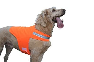 Dog Not Gone Visibility Products Safety Dog Vest, Hunter Orange