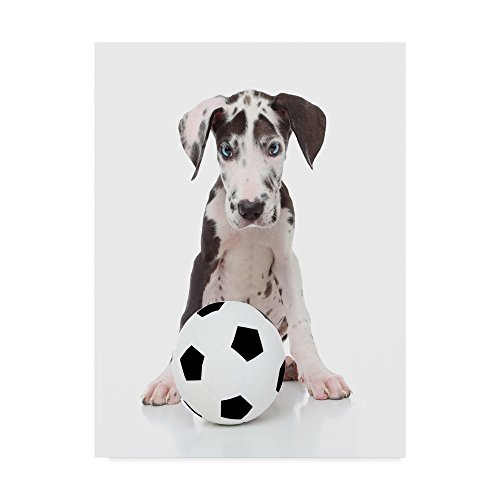 Soccer Dalmatian by Andrea Mascitti Puppies, 35x47-Inch by Trademark Fine Art