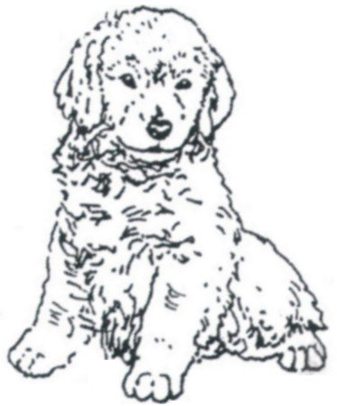 Dog Rubber Stamps - Golden Retriever Pup-999D Size: 1-1/4
