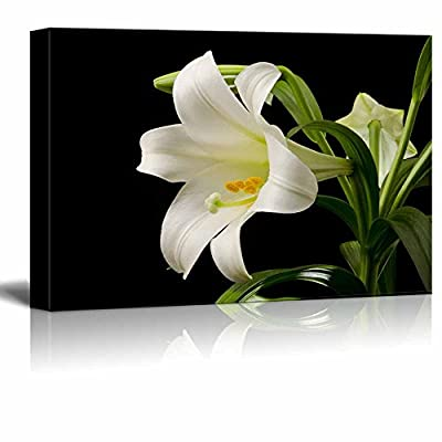 Canvas Prints Wall Art - White Blooming Lily on a Black Background | Modern Wall Decor/Home Decoration Stretched Gallery Canvas Wrap Giclee Print. Ready to Hang - 12