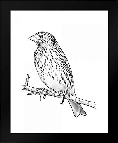(Sketch Bird II Framed Art Print by Greene, Taylor)