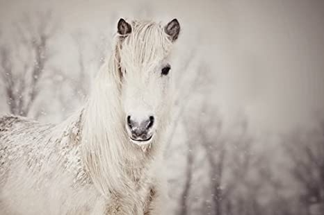 White Horse Close up Art Print on Canvas,Wall Decor Poster 20x30 inches