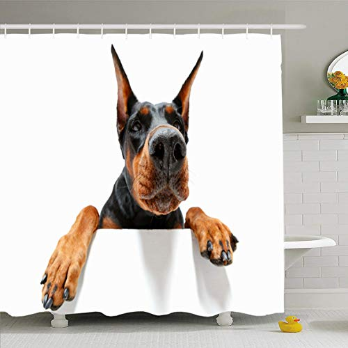 - Ahawoso Shower Curtain 72x72 Inches Guardian Dog Go You Close Climbing Pet Doberman Wildlife Pincher White Aggressive Bitch Waterproof Polyester Fabric Set with Hooks
