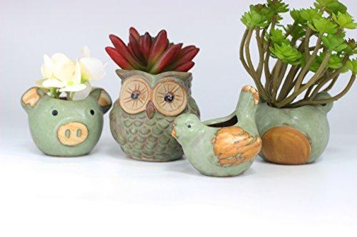 (Ceramic Mini Plant Flower Pot Container Green Owl Frog Pig Bird Pattern Succulent Animal Plant Pot Cactus Planter Flowerpot Bonsai Garden Pack of 4)
