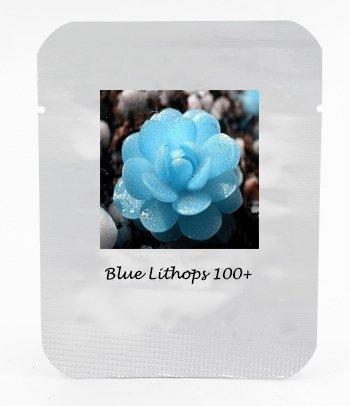 ADB Inc Bright Blue Lithops Livingstones Seeds Bonsai - Garden Livingstone