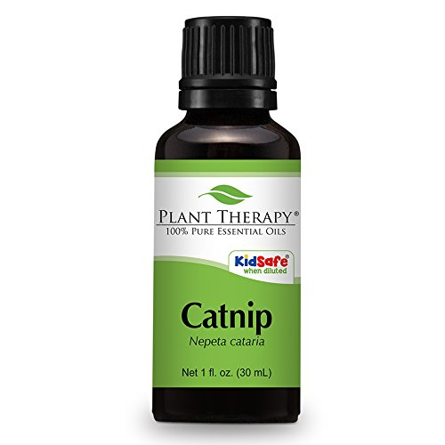 Catnip Essential Undiluted Therapeutic Grade