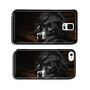 happy dog border collies cell phone cover case iPhone6 Plus