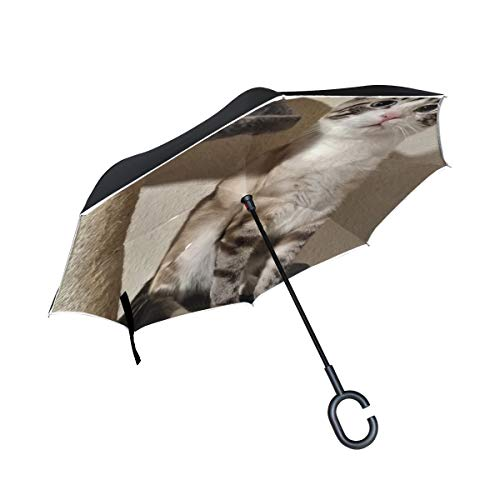 Cars Sport Compact Domestic (RYUIFI Double Layer Inverted Cat Beautiful Cute Domestic Cat Close up Pet Umbrellas Reverse Folding Umbrella Windproof Uv Protection Big Straight Umbrella for Car Rain Outdoor with C-Shaped Handle)