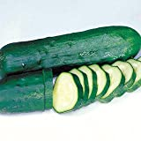 Cucumber Marketmore Certified Organic Seeds
