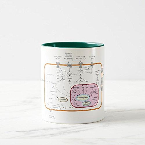 ransduction Pathways Diagram Coffee Mug, Hunter Green Two-Tone Mug 11 oz (1aaa Cell)