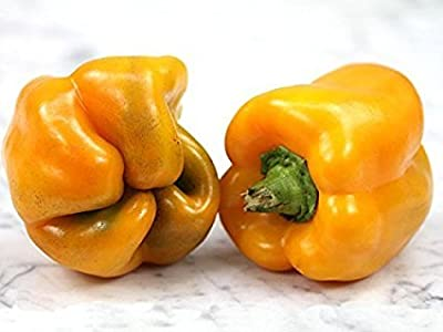David's Garden Seeds Pepper Bell Golden California Wonder DGS0021AS (Yellow) 50 Organic Heirloom Seeds