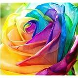 PATHONOR 200pcs rainbow rose graines rares coloré fleur plante jardin bonsaï S1