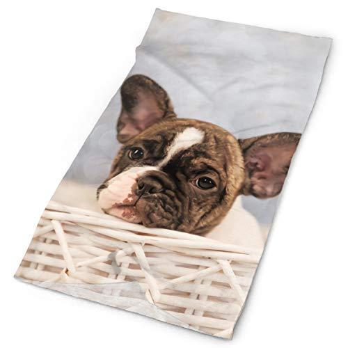 FULIHU Small Basket Bulldog Close-ups Unisex Sports Variety Scarf Head Scarf