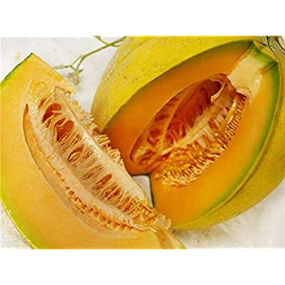 Amish Melon Seeds - Sweet orange flesh is very juicy with full muskmelon flavor (10 - Seeds) : Garden & Outdoor