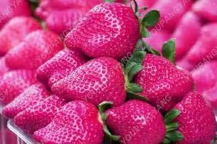 Homely 100 Pz Colore Raro Semi di Fragola Semi di Frutta Per Giardino Bonsai Balcone Vaso Quattro stagioni Facile Crescere Fragola Fru