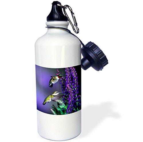3dRose Danita Delimont - Hummingbird - Ruby-throated Hummingbirds at Lubeca Meadow Sage Salvia - 21 oz Sports Water Bottle (wb_250981_1) (Salvia Sage Meadow)