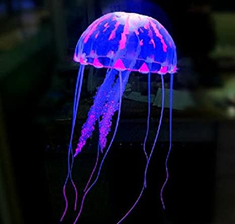 Image result for meduse fluorescenti
