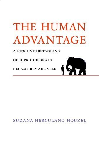 Vintage Avon Owl - The Human Advantage: A New Understanding of How Our Brain Became Remarkable (MIT Press)