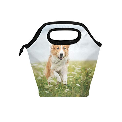Lunch Bag Red Border Collie Dog Printed Neoprene Tote Reusable Insulated Gourmet Lunchbox Container Organizer School Picnic Carrying For Men, Women, Adults, Kids, Girls, Boys