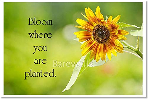 Barewalls Inspirational Quote by Mary Engelbreit with A Pretty Sunflower in Full Bloom in The Summer. Paper Print Wall Art (24in. x 36in.) ()