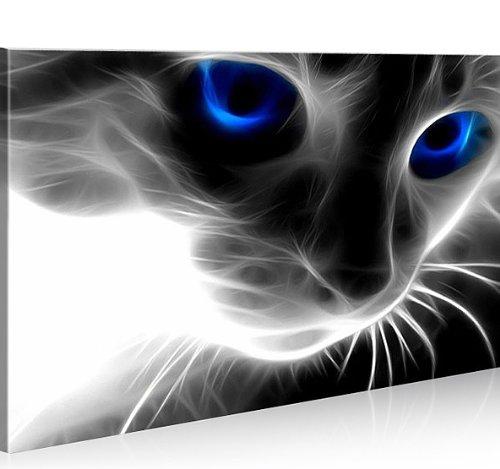 Bild-auf-Leinwand-Magic-Cat-1p-Katze-Topseller-Kunstdruck-von-islandburner-XXL-Poster-Leinwandbilder-Wandbilder