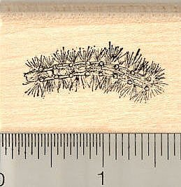 - Wooly Caterpillar Rubber Stamp