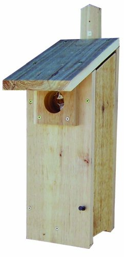 Stovall 4H Woodpecker House Review