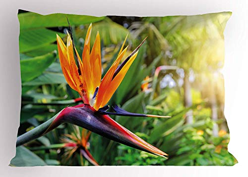 HFYZT Plant Pillow Sham, Close-up Image of Strelitzia Reginae Bird of Paradise Flower Madeira Island Portugal, Decorative Standard Queen Size Printed Pillowcase, 18 X 18 Inches, ()