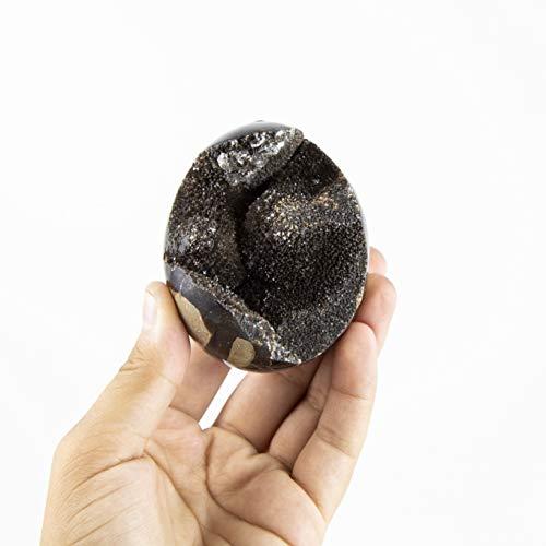 Beverly Oaks Septarian Stone Egg - Natural Septarian Geode - Dragon_s Stone Septarian Nodule (sep_egg_6)