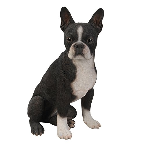 Realistic Life Size Boston Terrier Statue Detailed Sculpture Glass Eyes Hand Painted Resin 16 inch Figurine Home Decor Amazing - Dog Terrier Figurine Boston