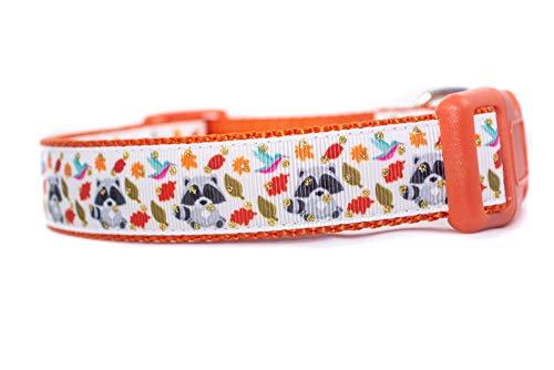 Raccoon Fall Dog Collar 1