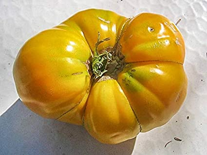 Agrobits Belle Coeur Tomate 10 Herencia Bonito Y