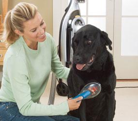 Amazon Com Bissell Shedaway Handheld Pet Grooming Vacuum