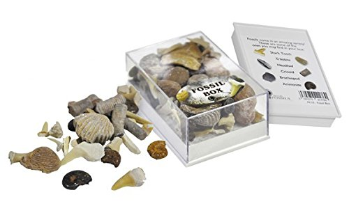 Collection Box of Small Fossils ()