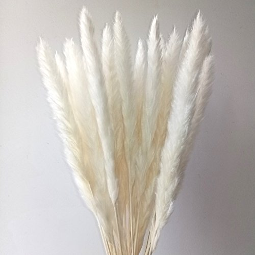 "Dongliflower 25 Pcs Natural Dried Small Pampas Grass, Phragmites Communis,Wedding Flower Bunch, 24"" Tall for Home Decor (white)"