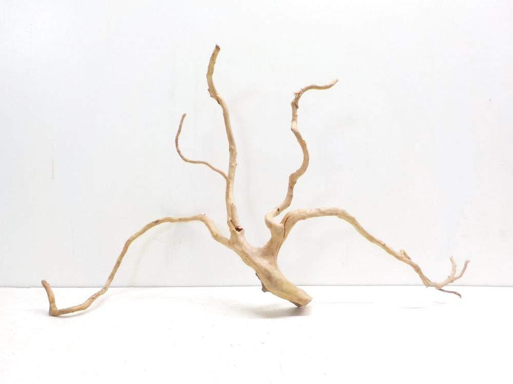 AQUARISTIKWELT24 7294 XXXL Moorkien Root Dimensions 100 x 25 x 60 cm