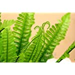 FYYDNZA-50Cm-Spring-12-Grass-Leaves-Artificial-Silk-Leaf-Flower-Green-Fake-Plant-Flower-Room-Decoration