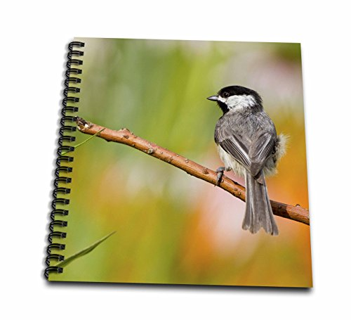 - 3dRose Carolina Chickadee in Flower Garden, Marion, Illinois, USA Memory Book, 12 by 12