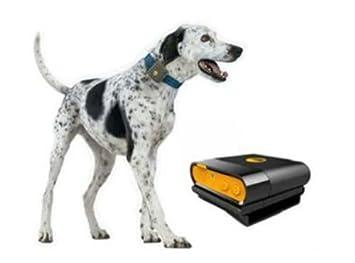 Gps Dog Tracker Collar Waterproof Canada Sim Card Waterproof Tracking Device