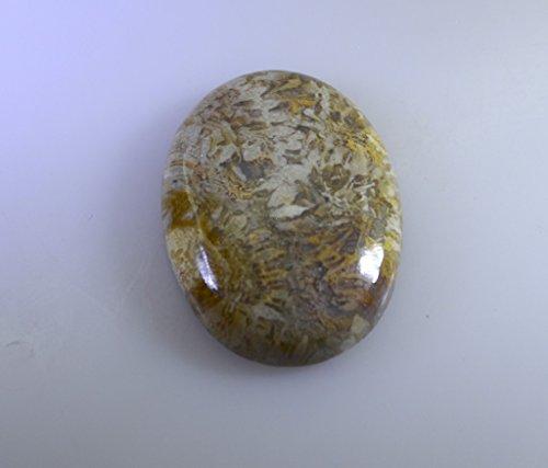 fossilcoral pierre lâche cabochon ovale 1 pc 18.5x25 mm stfosc-290016