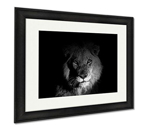 Ashley Framed Prints Lion At Night, Modern Room Accent Piece, Black/White, 34x40 (frame size), Black Frame, - Ebony Panthera