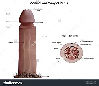 Think, that Penis