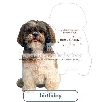 Amazon Shih Tzu Birthday Card Paper House Productions Health