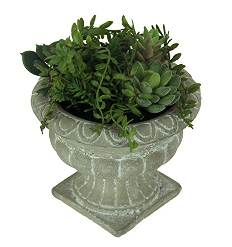 Things2Die4 Mini Succulent Garden in Cast Stone Grecian Urn Planter