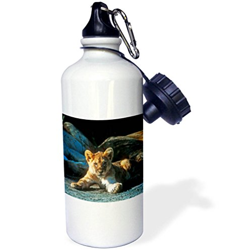 3dRose Danita Delimont - Baby Animals - African Lion, Panthera leo, Cub Resting with its Family - 21 oz Sports Water Bottle (African Lion Panthera Leo)