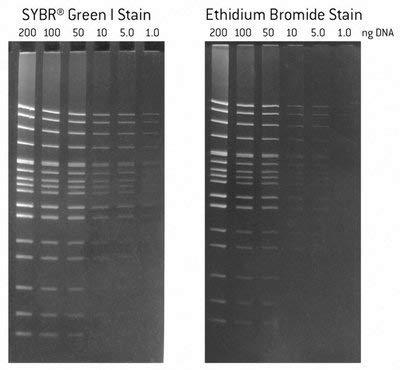 - 50523 - SYBRï¾ Green II - SYBR Green Nucleic Acid Gel Stains, Lonza - Each